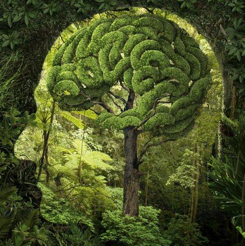 large.Nature-Brain.jpg.c7a2a6835bb57b2c5dfa64c7acc47dd7.jpg