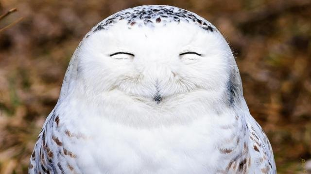 large_owl.jpg.31767f0b8aeda0406cb2b2aba9097c81.jpg