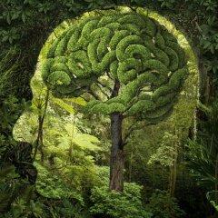 small.Nature-Brain.jpg.2e9436f3832cca0dcce09a58255c2b6a.jpg