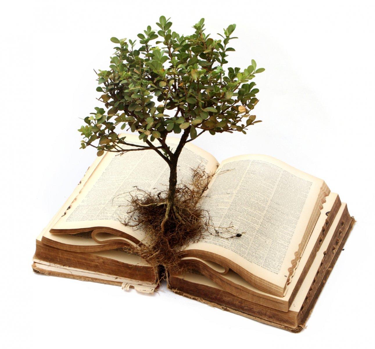 large.roots.jpg.509af689a97ad76836bf881a4d1c39f4.jpg