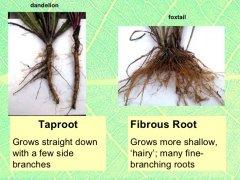 root examples.jpg
