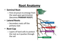 roots off of  tap diagram.jpg