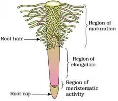 revision-notesbiologymorphology-of-flowering-plants_0.jpg