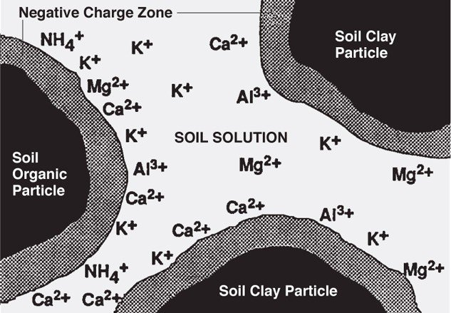 exchangable and solution K in soil by Penn State AG.jpg