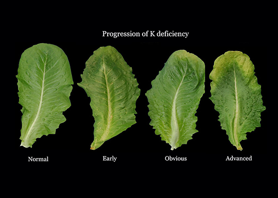 leafyvegetables-def-potassium.png