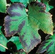 K defiency in various plants.jpg