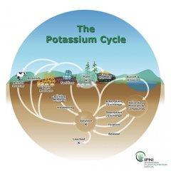 potassium-cycle-University of Minnesota
