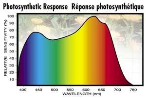 large.Plant-Human-Eye-Response_01.jpg.5fcfd1b6a76e5b8bf760408d2c166349.jpg