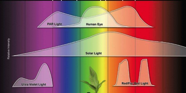 lighting-par-sun-eye-comparison-chart-600x300.jpg