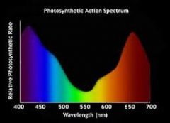 photosynthetic action spectrum.jpg