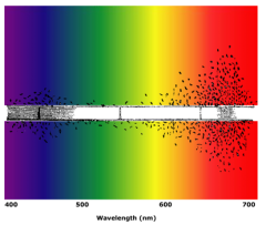 Engelmann's photosynthetic action spectrum.png