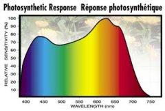 Plant-Human-Eye-Response_01.jpg