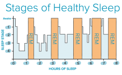 Stages-of-Sleep cycle graph.png